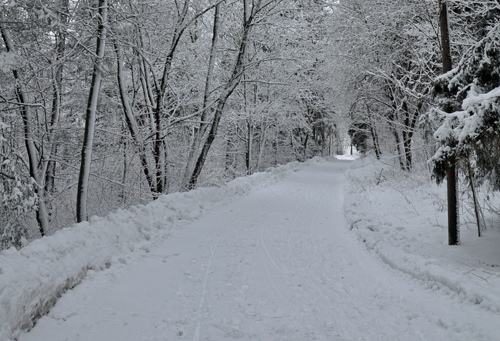 Park Ridge snow Expert Removal